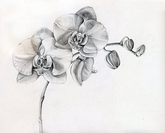 Orchid drawing.jpg